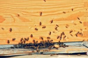 photodune-5207638-beehive-s-704x466